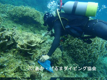 あか・げるまダイビング協会① (1).JPG