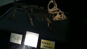 プロケラトプス.jpg
