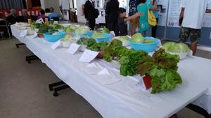 産業まつり2019野菜.jpg